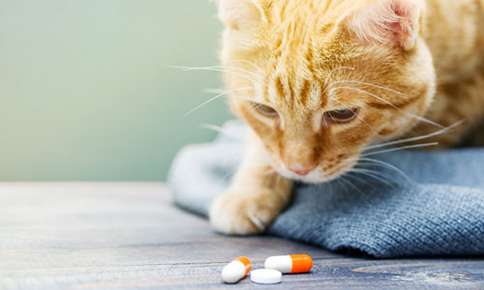 Try These Tricks the Next Time You Have to Give Your Pet Medication