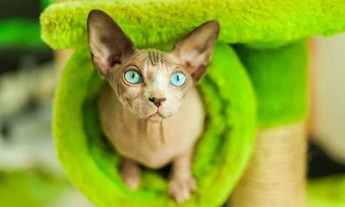 Protect Your Hairless Pet's Sensitive Skin with These Tips