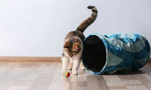 How to Help Your Cat Get More Exercise