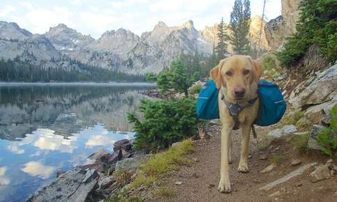 Should Your Dog Wear a Backpack?