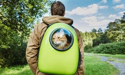 Cat Backpacks: The New Trend in Feline Transportation