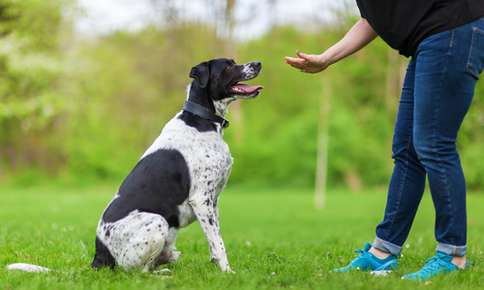 Training Tips for Your Pets