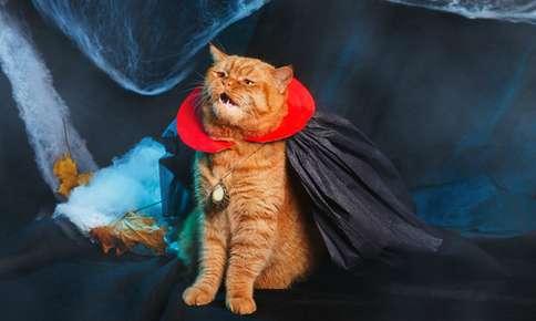 Best Pet Costumes