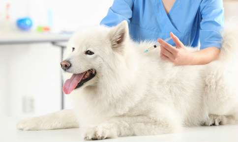 What Vaccines Are Right For Your Pet?