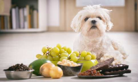 How To Avoid A Pet Poisoning