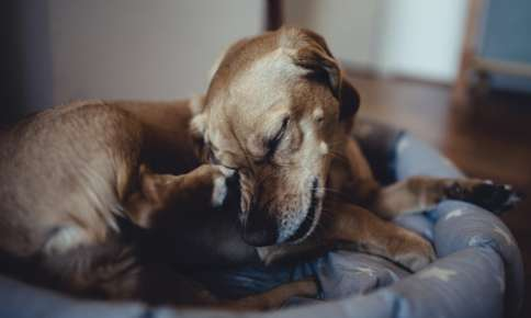 Common Pet Skin Issues and How to Treat Them
