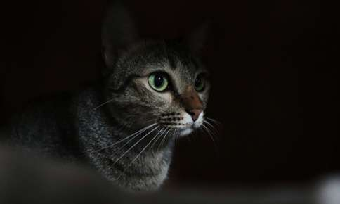 Managing Your Cat's Night-Time Activity