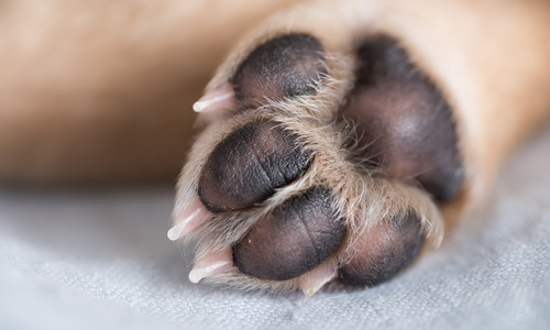 How to Treat Common Paw Problems in Dogs