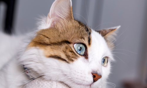 9 Reasons Your Cat May Be Losing Weight