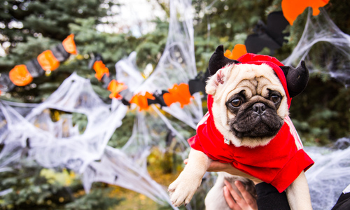 Safety Guidelines for Pet Costumes