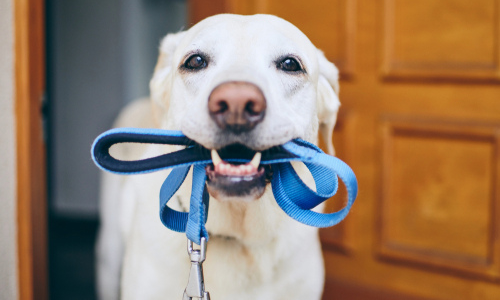 Learn How to Master Walking Your Dog for Walk Your Pet Month