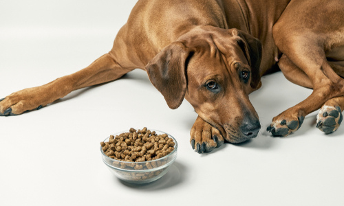 Most Common Digestive Issues in Dogs and How to Relieve Them