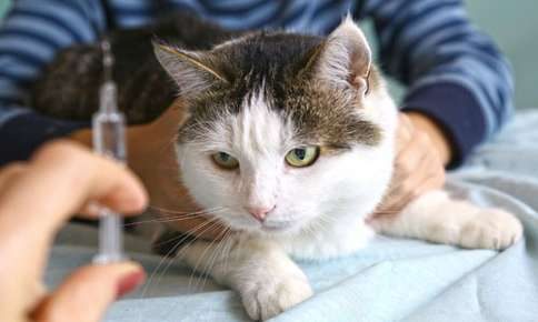 Diabetes in Cats: Prevention and Treatment