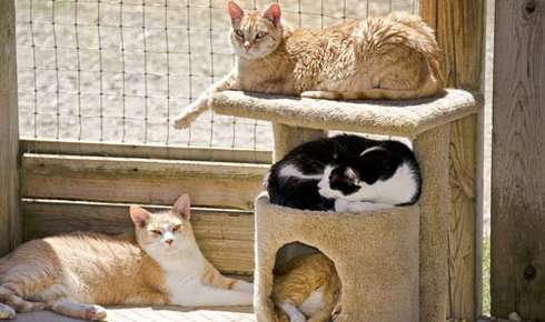 Is a Cat Enclosure Right for Your Cat?