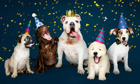 Pawty with Your Pet – National Dog Party Day