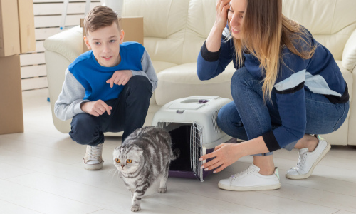 How to Help Your New Cat Feel Welcomed in Your Home