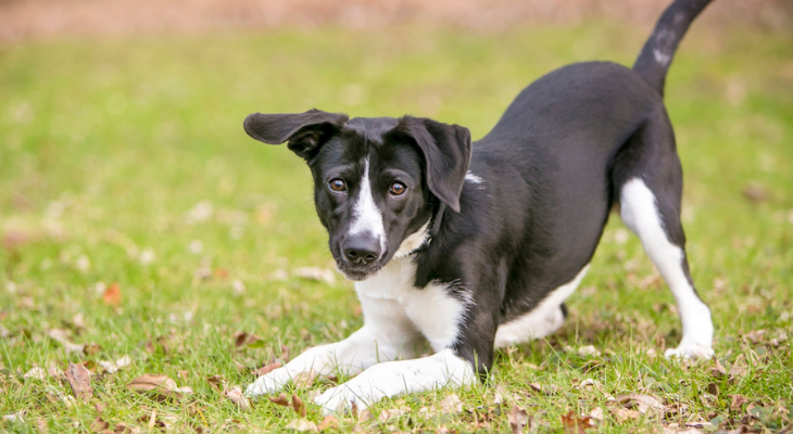 What Your Dog's Body Language Means