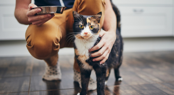 Mistakes to Avoid as a Cat Owner