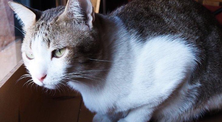 Feline Leukemia Virus: What You Need to Know