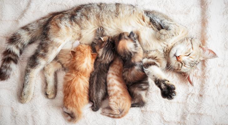 Preparing for Your Kitten's Developmental Milestones
